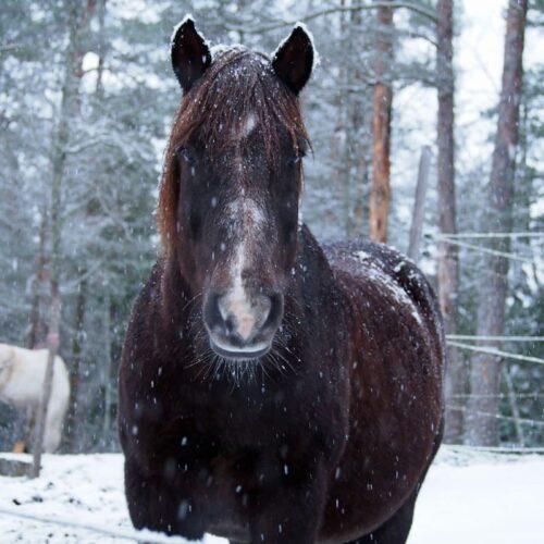 Hevostarvikkeet